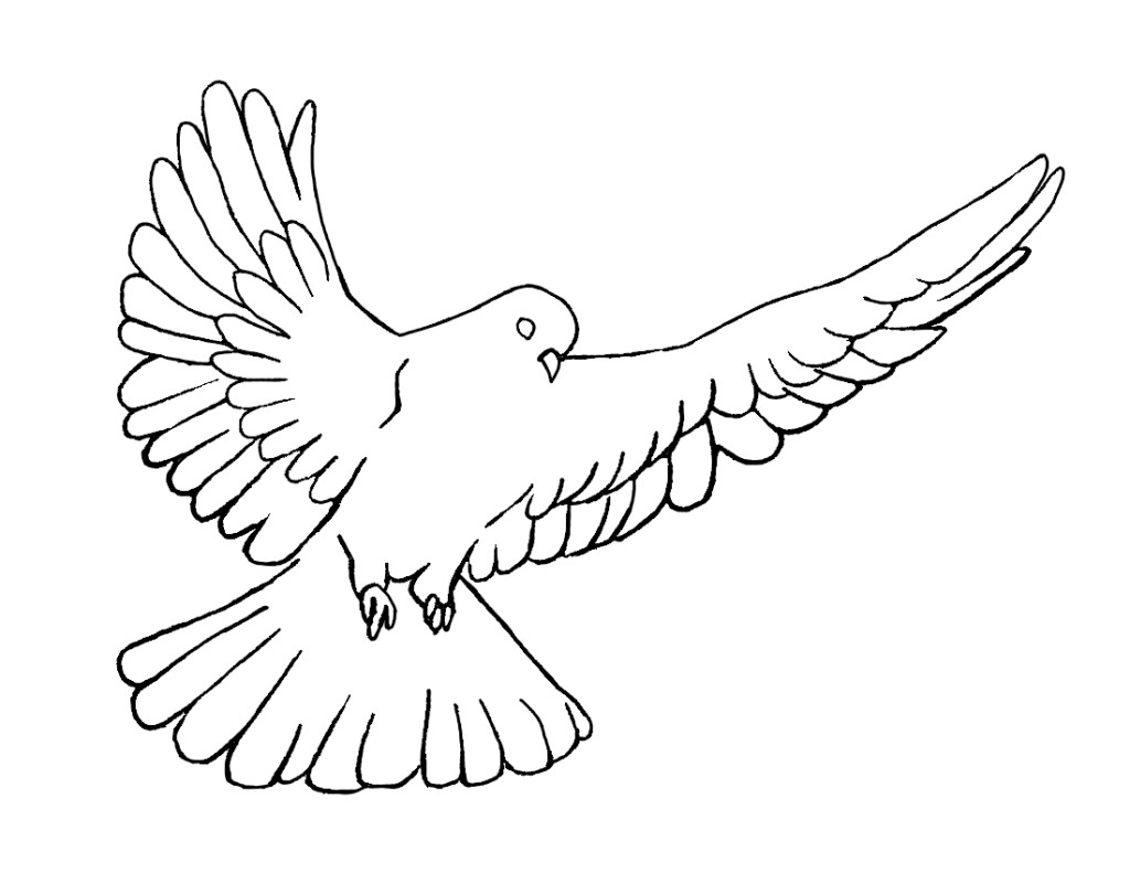 Line Art Dove : Line drawing of dove clipart best