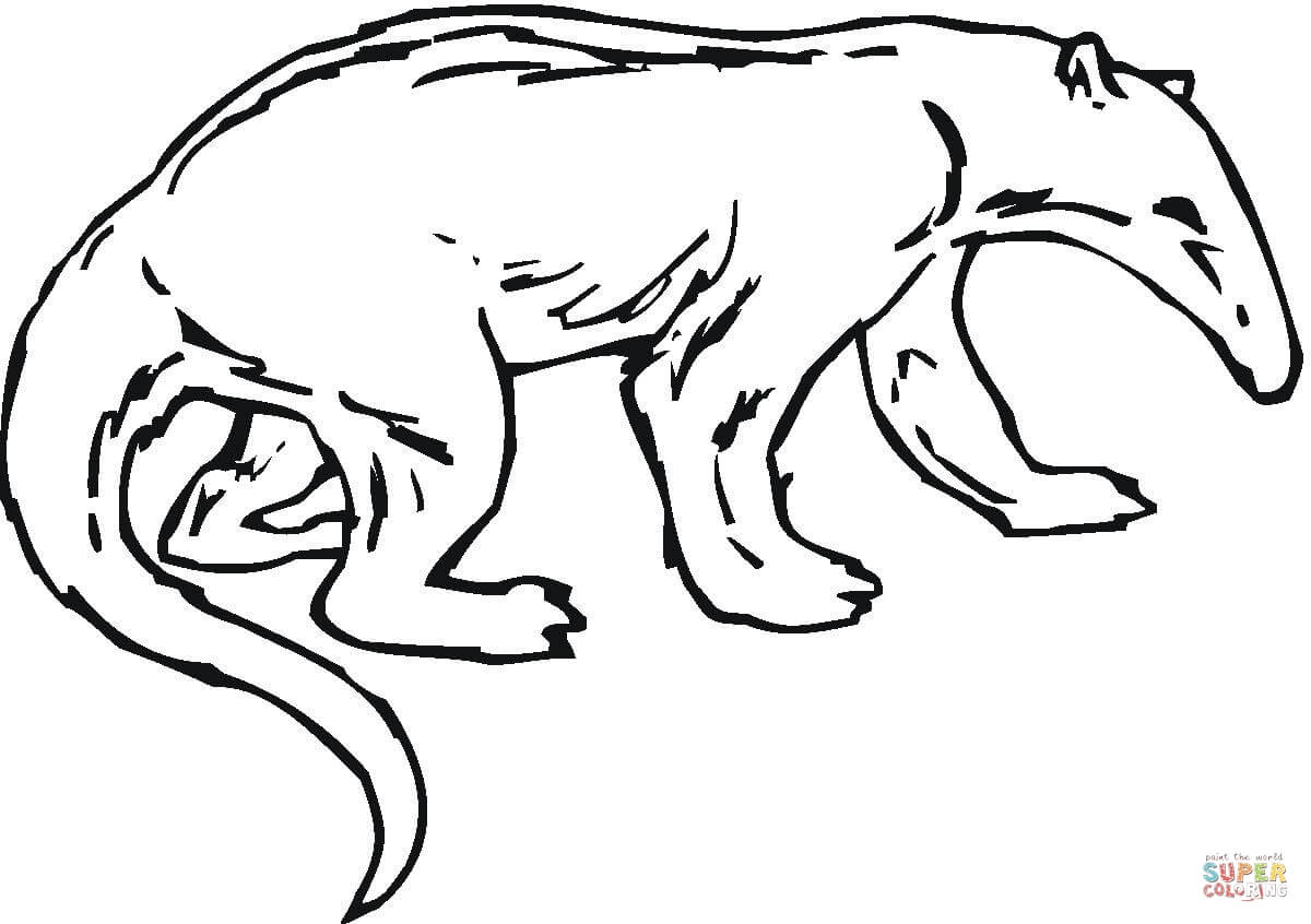 anteater coloring pages - photo#23