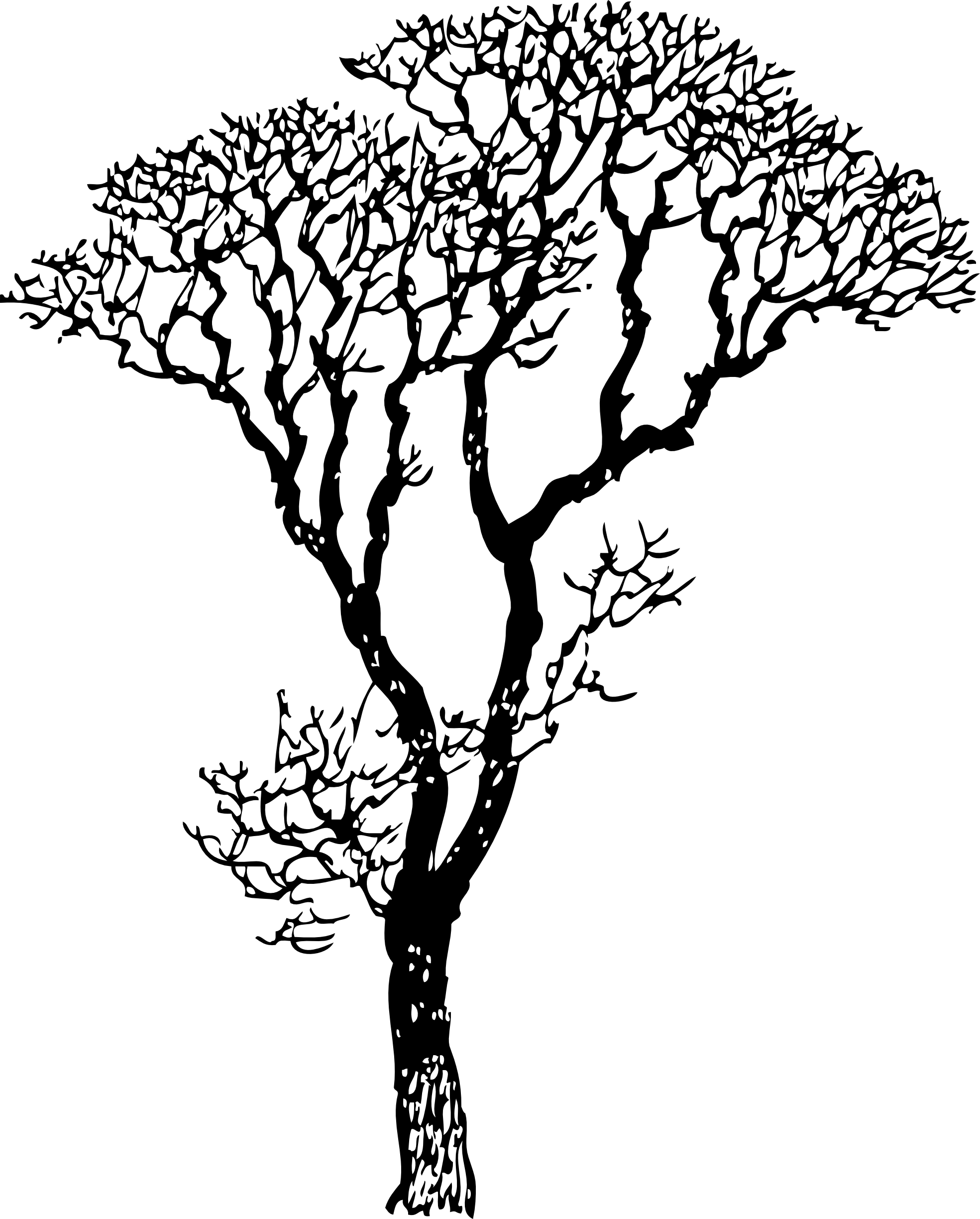 Line Art Free : Bare tree clip art free clipart best