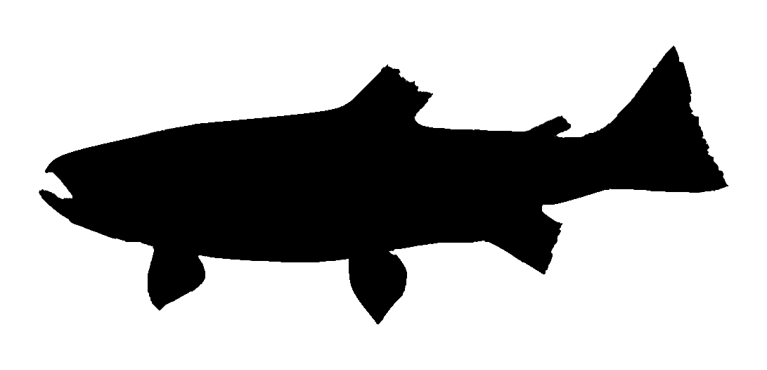 Jumping trout silhouette