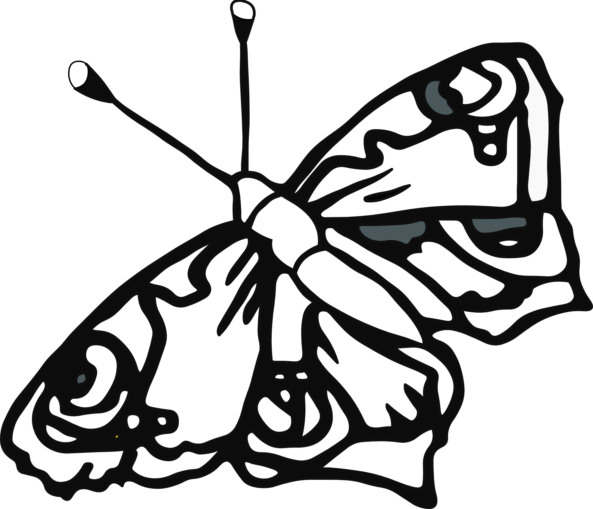 butterfly 58 black white line art tatoo tattoo SVG