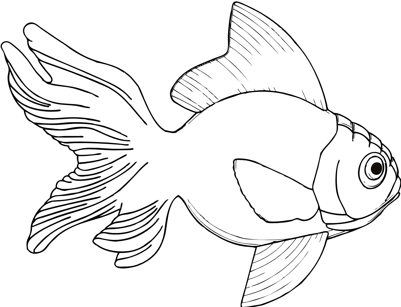 Line Drawing Clip Art : Fish line art clipart best
