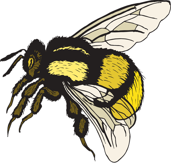Line Art Bee : Bumble bee clipart best