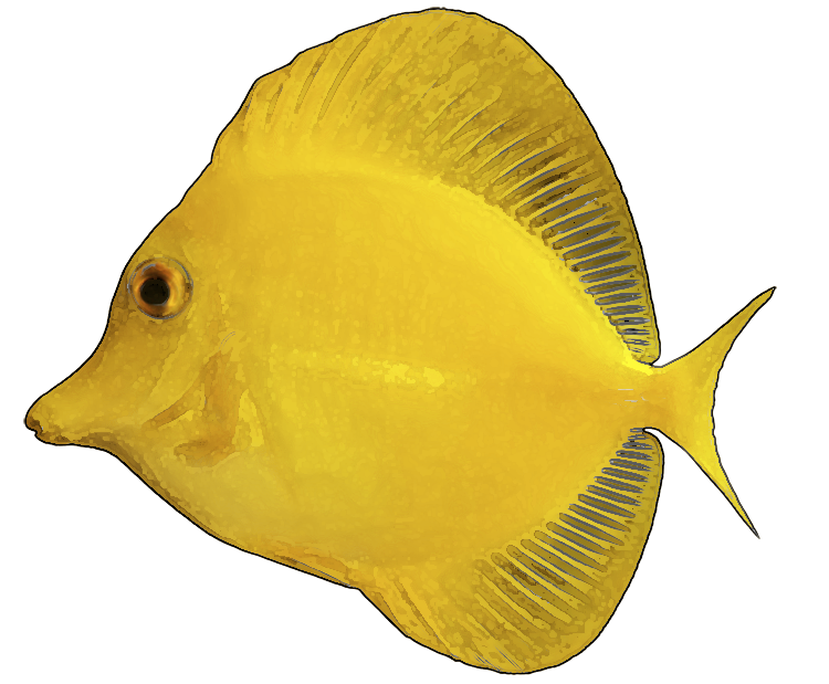 free clipart tropical fish - photo #26