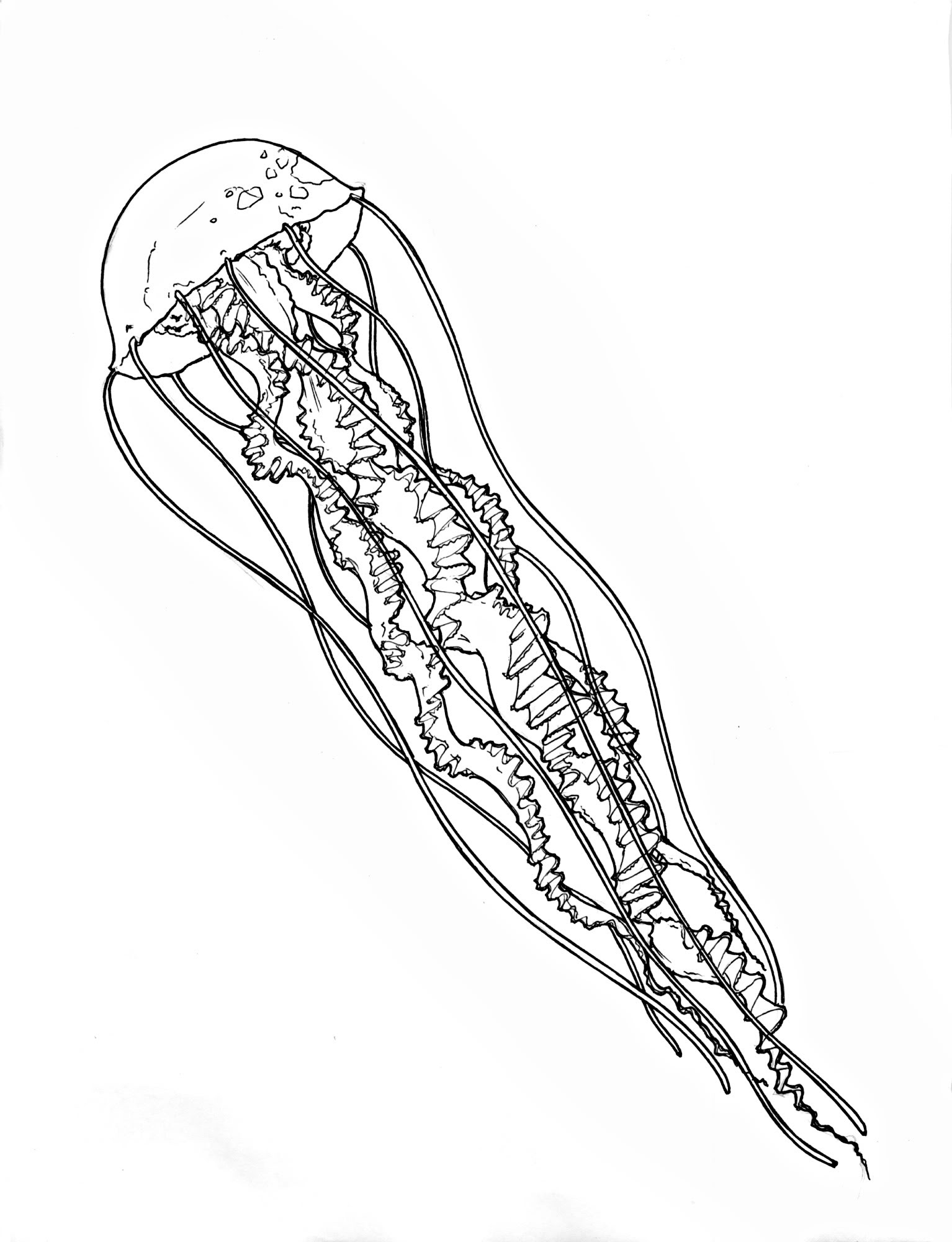 Line Art Jellyfish : Jelly fish line drawing