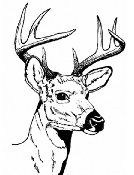 deer skull coloring pages - photo#8