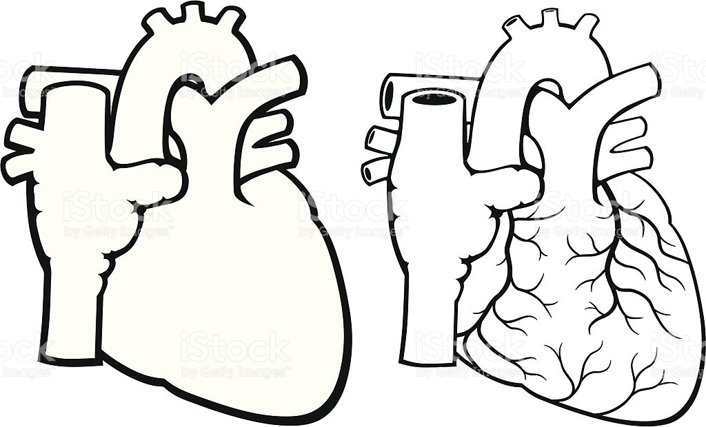 Human Heart Clipart Bl...