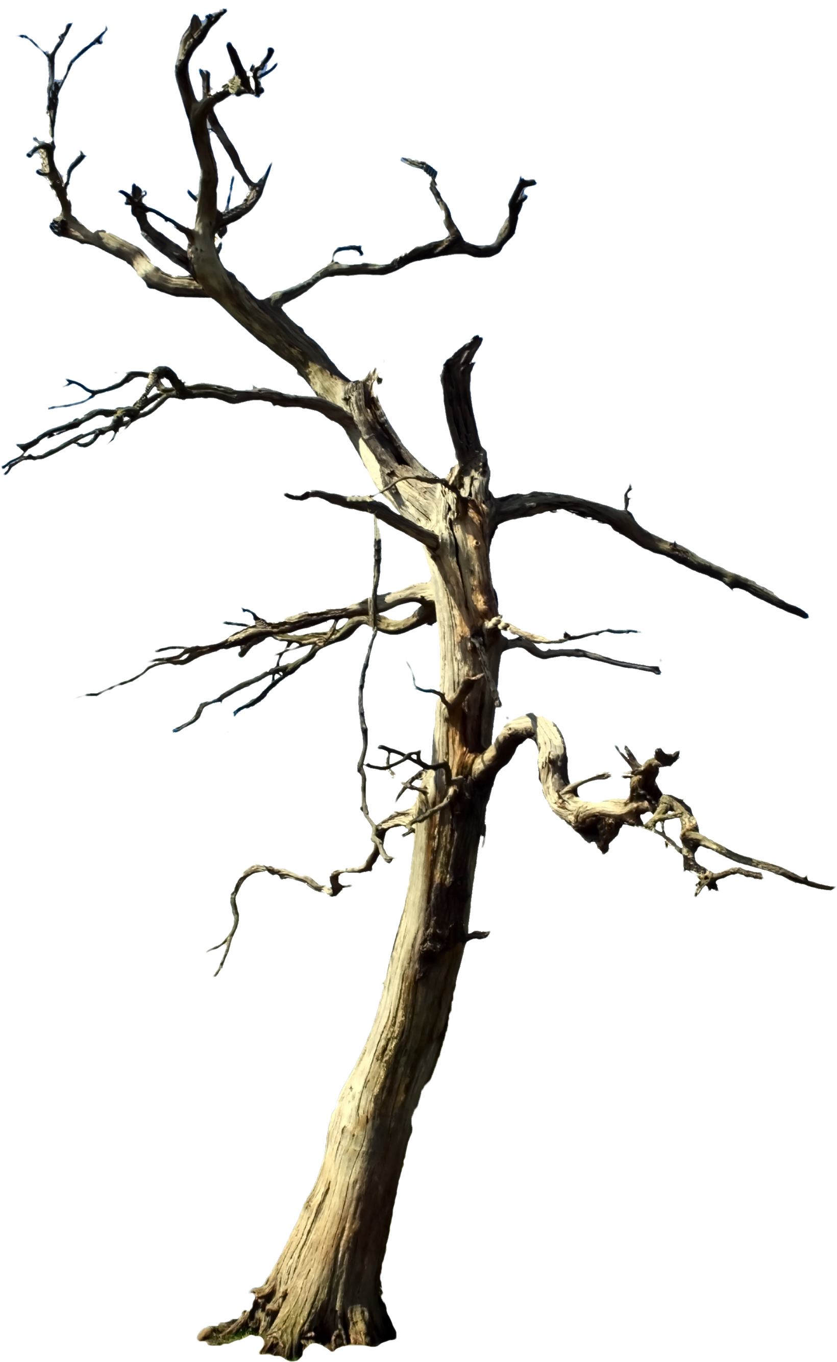 dead tree png clipart best tree branches clip art images tree branches clip art images