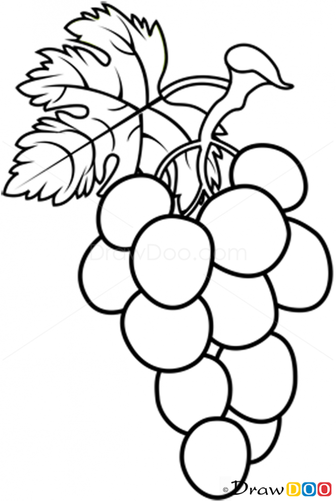 Drawing Lines With Php : Grapes drawing clipart best