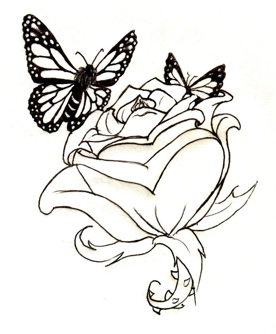 Butterfly and rose drawing - photo#1