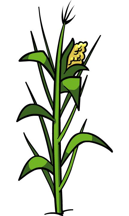 corn plant clip art clipart best backyard garden clipart backyard clipart free