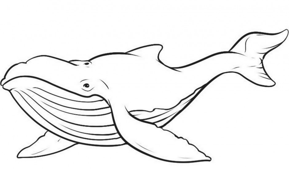 blue whale eating coloring pages - photo#22