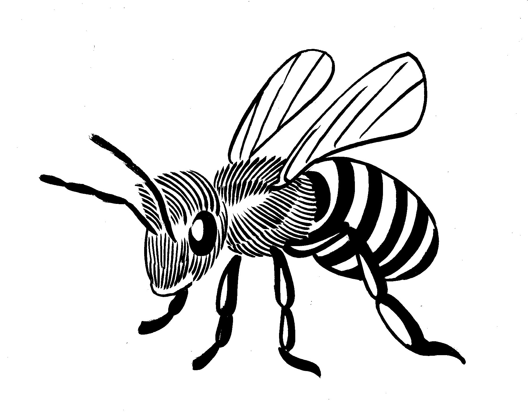 Line Drawing Photos : Line drawing simple bee clipart best