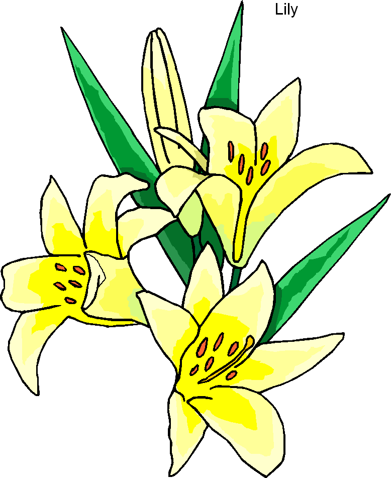 lily flower clip art