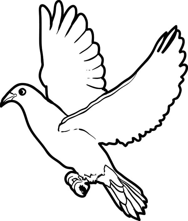 bird wing coloring pages - photo#6