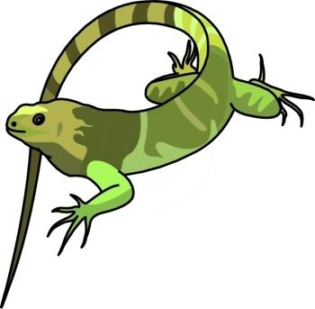 Best Iguana Clipart 14000  Clipartioncom