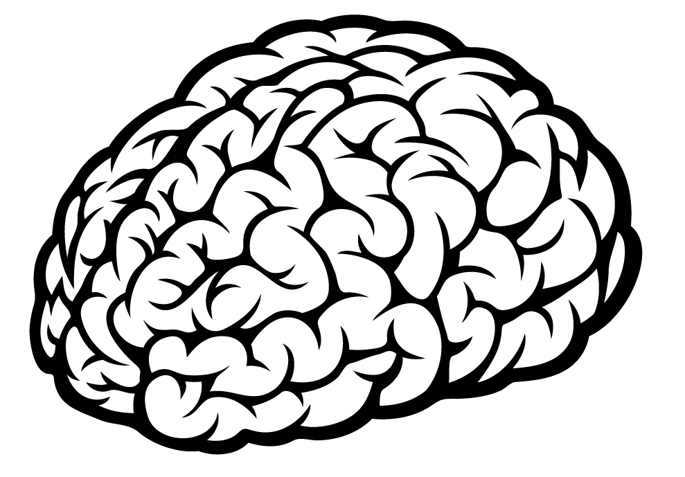 brain sketch with lobes outline svg clipart best