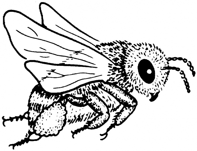 Bumble bee outline clipart best for Bees coloring pages
