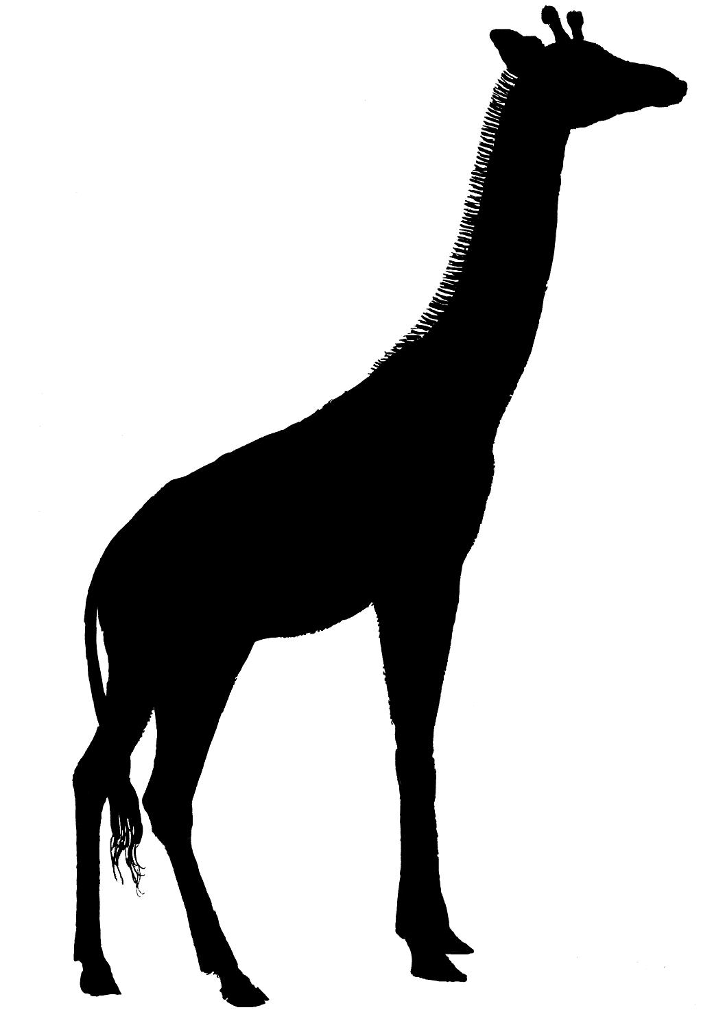 Giraffe Silhouette - ClipArt Best