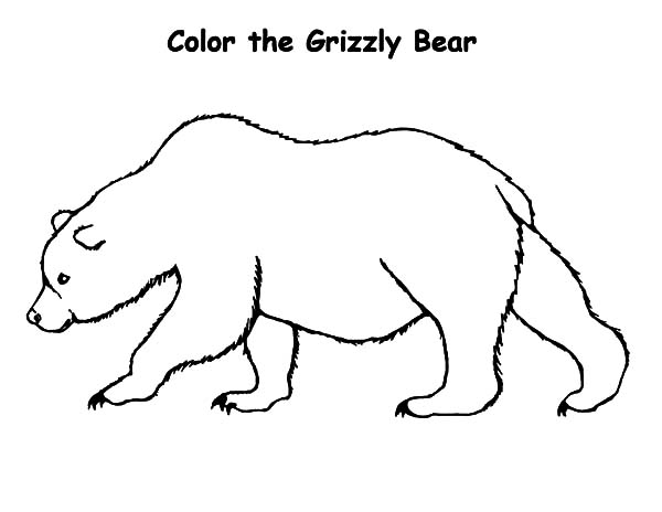 bear coloring pages sparklebox free - photo#4