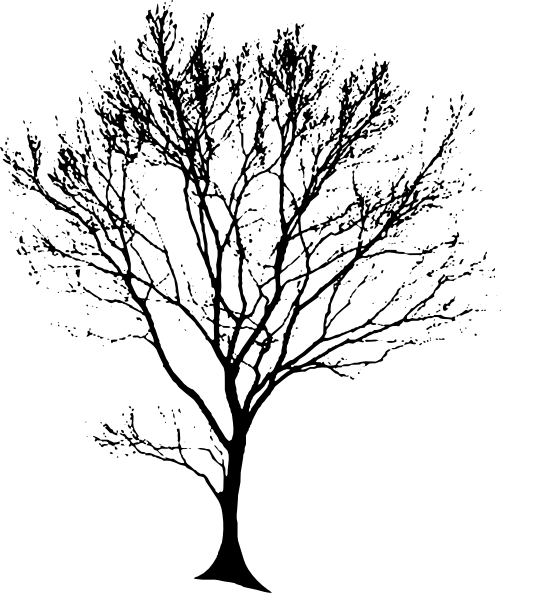 Line Art Of Trees : Line drawing of a tree clipart best