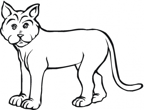 Lynx coloring pages | Super Coloring