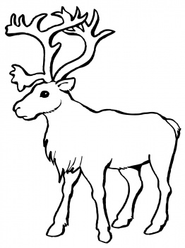 Reindeer Caribou coloring page | Super Coloring - ClipArt Best ...