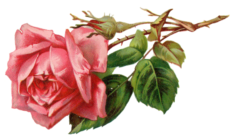 Tea Rose Clipart Black And White: Rose Clip Art Black And White Border