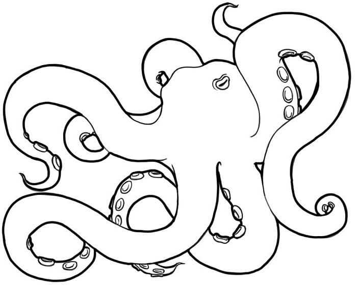 Line Art Octopus : Octopus line drawing clipart best