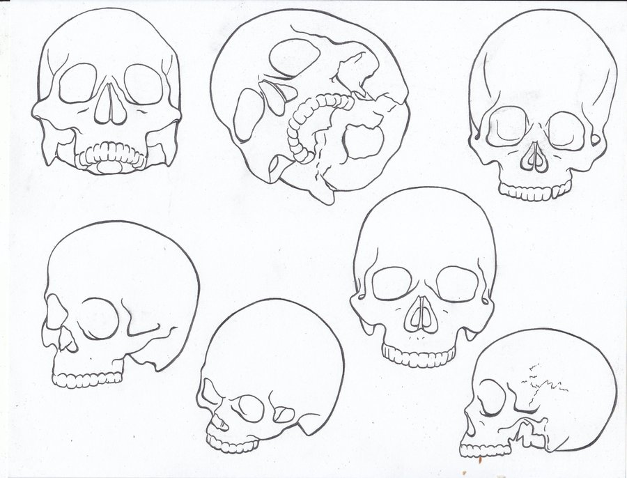Skeleton Face Line Drawing : Skull line drawings clipart best