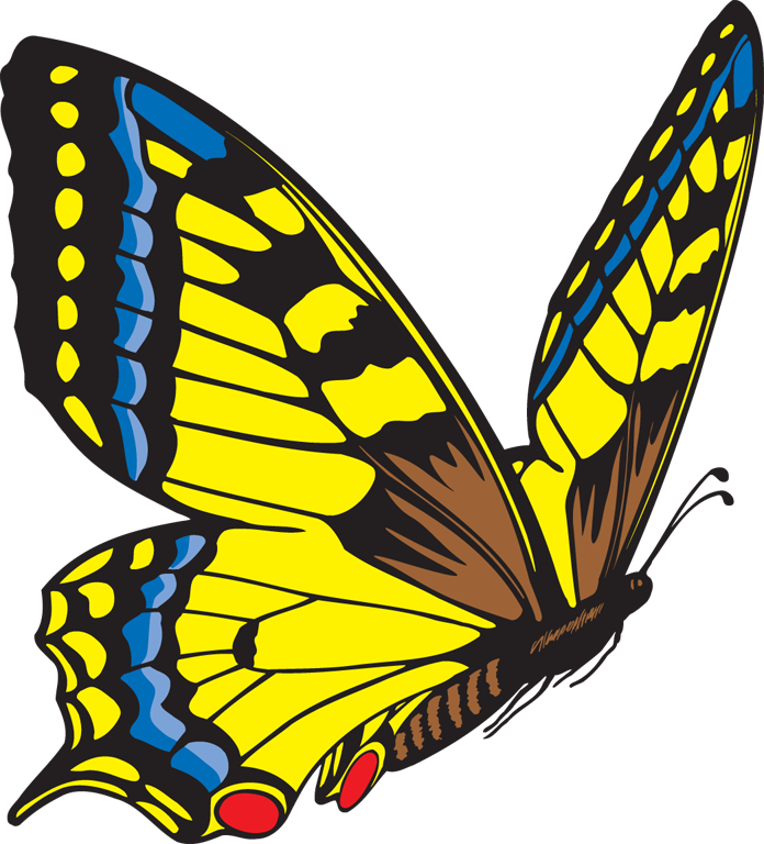 Animated Butterfly Clipart - ClipArt Best