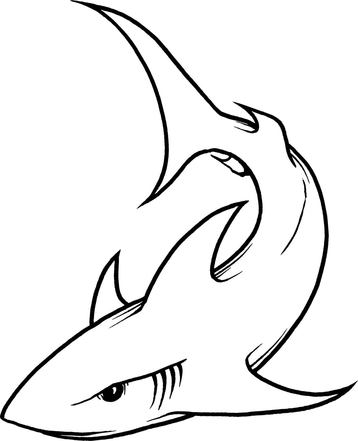 Line Drawing Of Tattoo : Shark «line drawing «other «tattoo tattoo design art