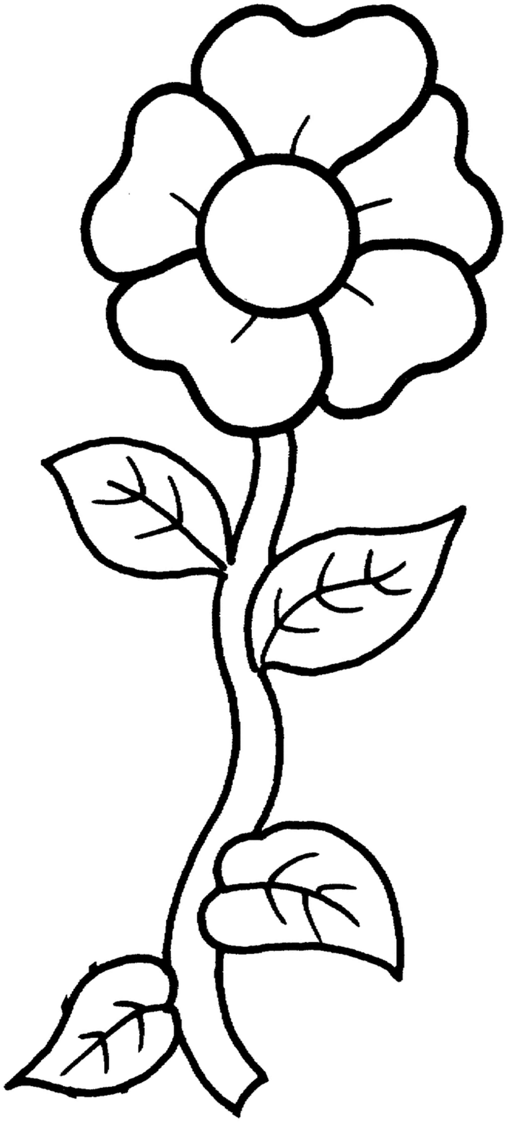 poppy flower coloring page - poppy outline printable clipart best