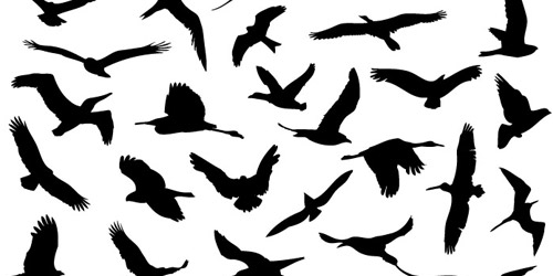 How to Draw a Bird Flying Simple Simple Flying Bird Drawing