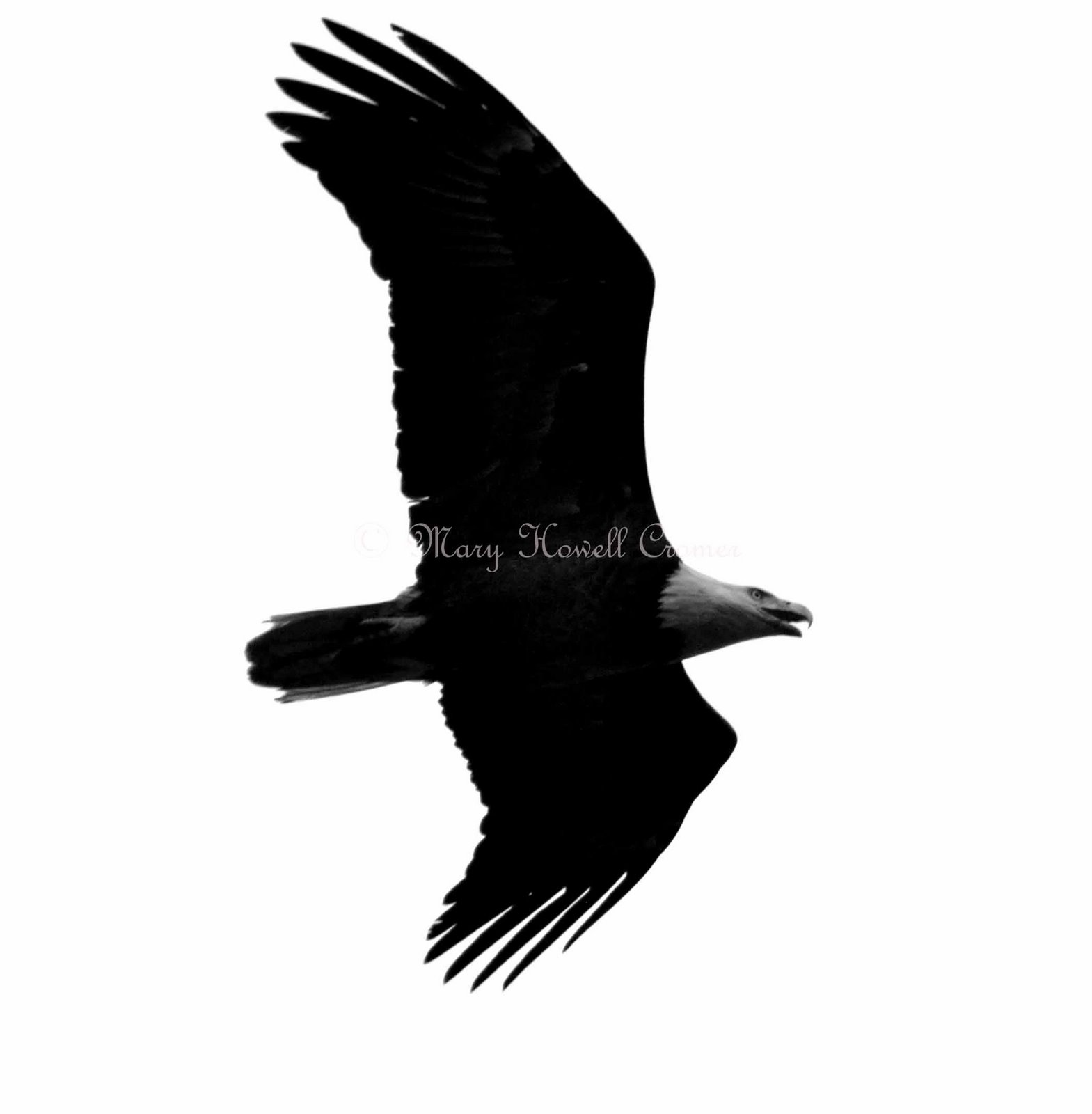 Free Clipart Eagles Images