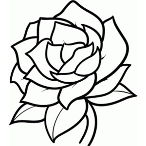 pictures of how to draw a flower