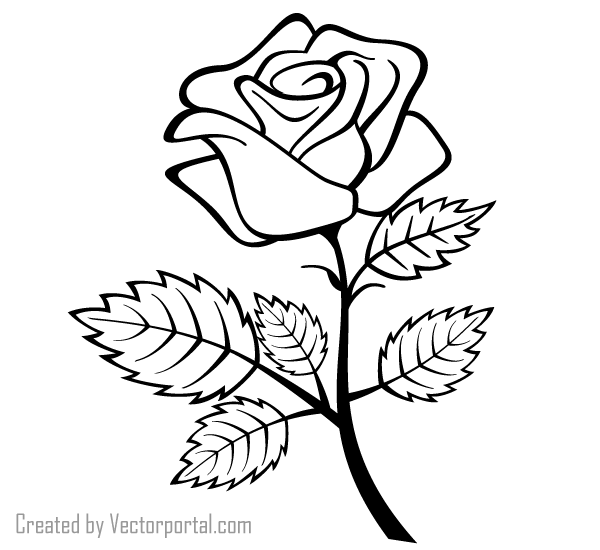 Roses and Rose outline