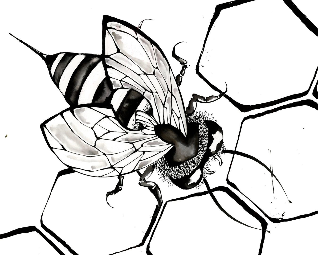 Line Drawing Bee : Bee line drawing