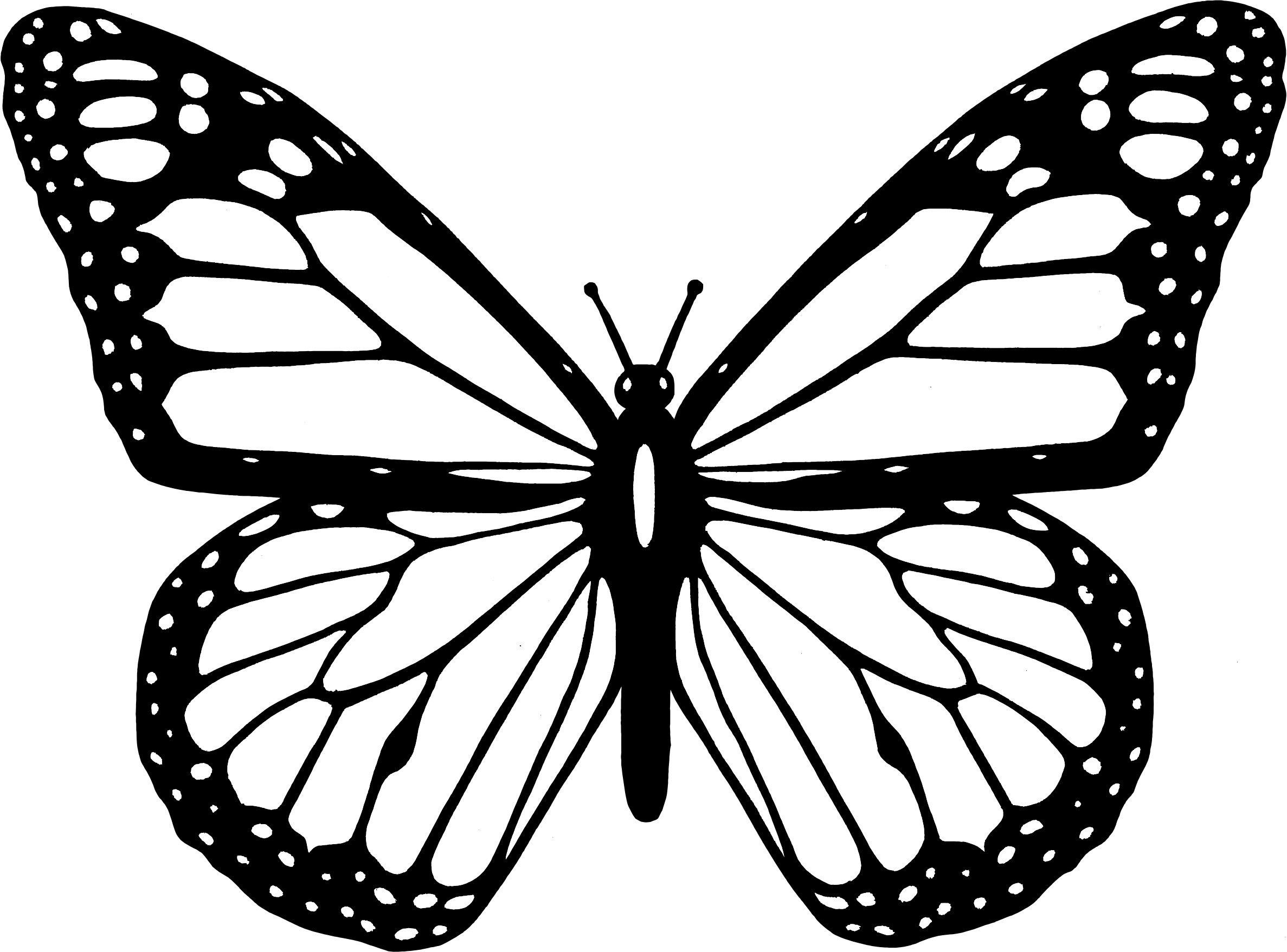 Butterfly Drawing Black And White - ClipArt Best