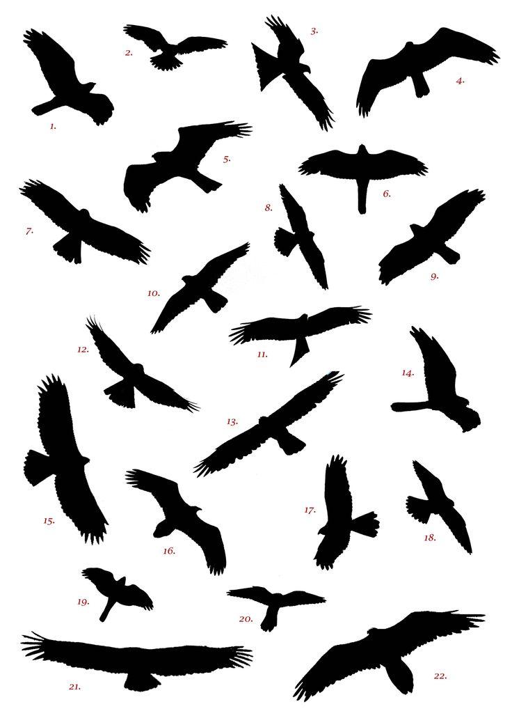 Flying Bird Sketch Images Stock Photos amp Vectors