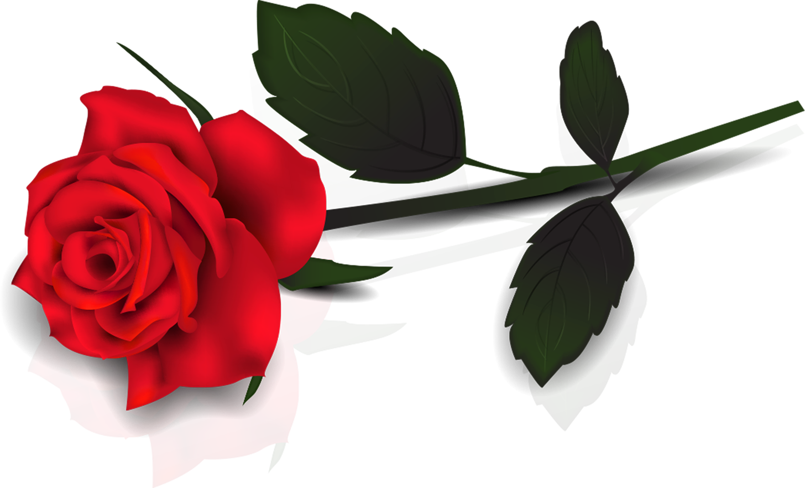 red roses clipart - photo #6