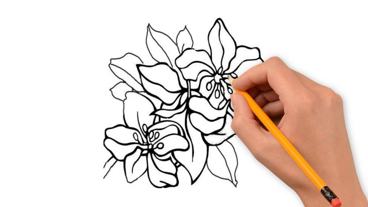 Flower Nature Pencil To Draw Step By YouTube