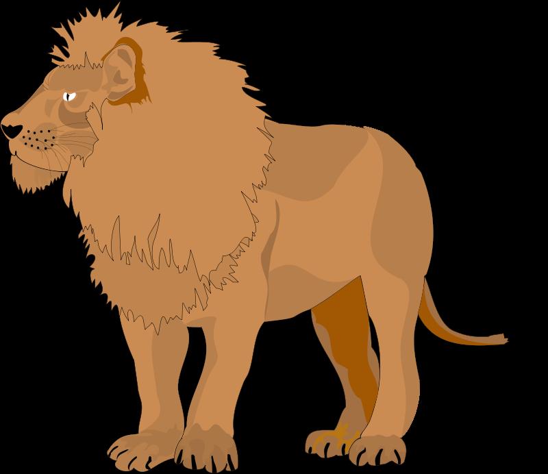 lion animal brown 1366x768 - photo #46