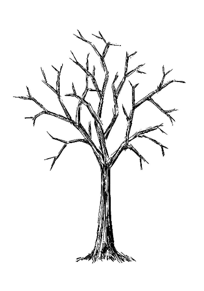 Bare Tree Images - ClipArt Best