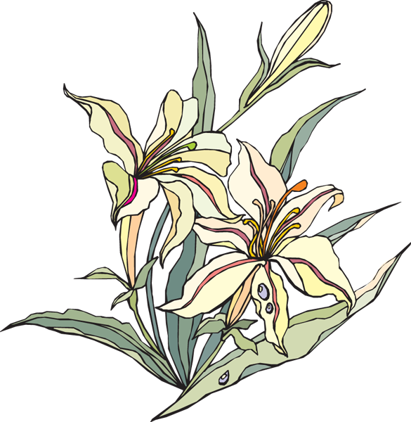 easter lilies free clipart - photo #32