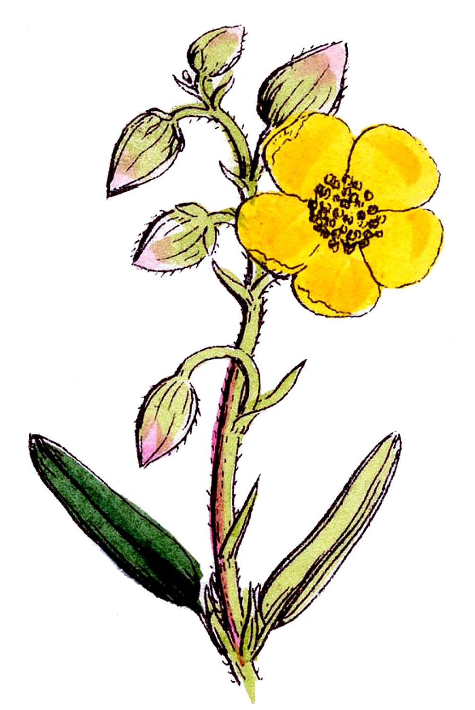 Wildflower Clip Art Pretty wildflowers - the
