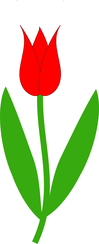 Clip Art Tulip Clip Art tulip clip art clipart best border clipart