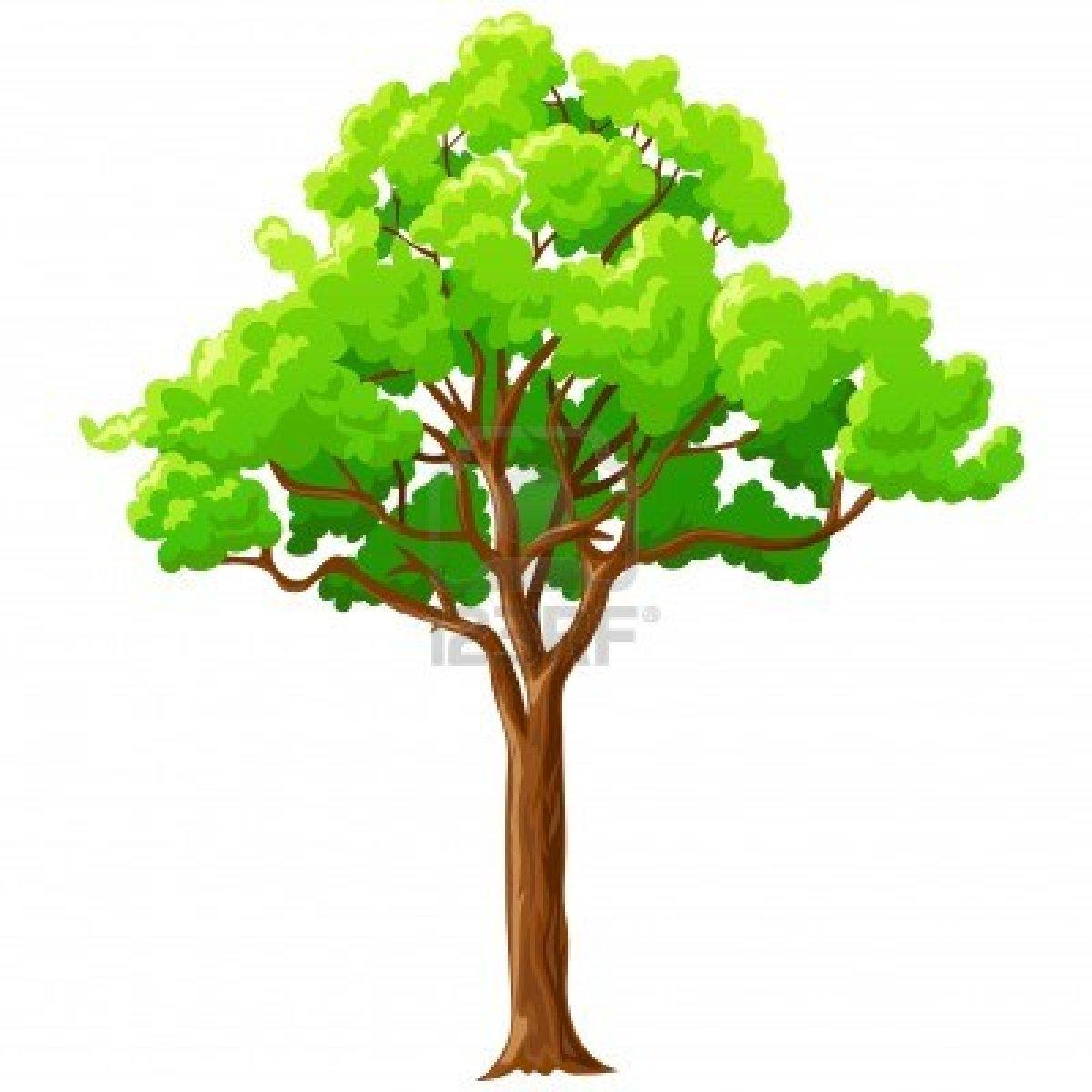 Tree Cartoon - ClipArt Best