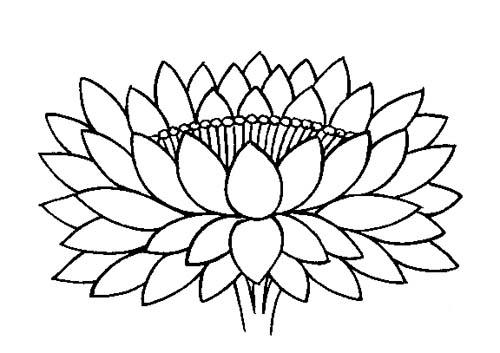 Line Art Lotus : Lotus line drawing clipart best