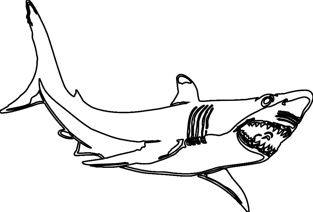 the great white shark black white line art ... - ClipArt Best ...